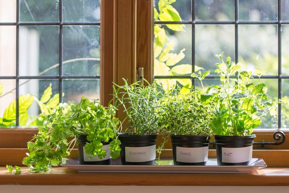 Kuchnia Pełna Ziół I Kwiatów Czyli Rośliny Doniczkowe