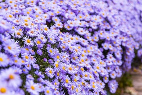 Kwiaty Wieloletnie Ogrodowe I Na Rabaty Jakie Wybrać