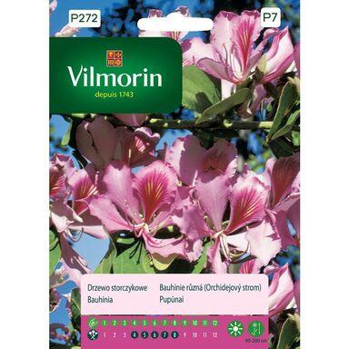 Nasiona kwiatów Drzewo storczykowe VILMORIN