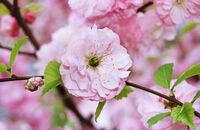 Rośliny kwitnące wczesną wiosną