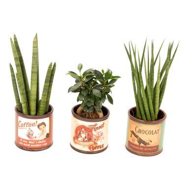 Rośliny MIX Easy Care w ceramicznej osłonce 40 cm