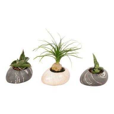Rośliny MIX Easy Care w kamieniu 15 cm
