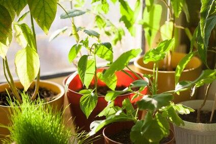 Jak Pielęgnować Rośliny Doniczkowe Zimą Porady Leroy Merlin