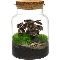 Las w słoiku / Kompozycja roślin w szkle