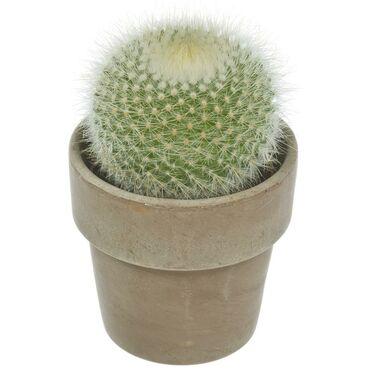 Kaktus w ozdobnej osłonce ceramicznej MIX 12.5 cm