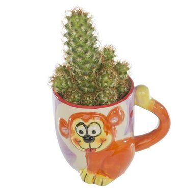 Kaktus w ozdobnej osłonce ceramicznej MIX 10 cm