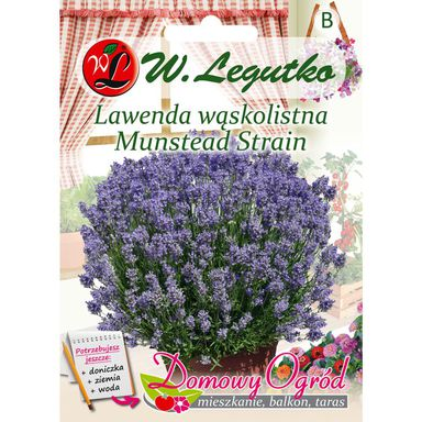Nasiona ziół MUNSTEAD STRAIN Lawenda wąskolistna W. LEGUTKO