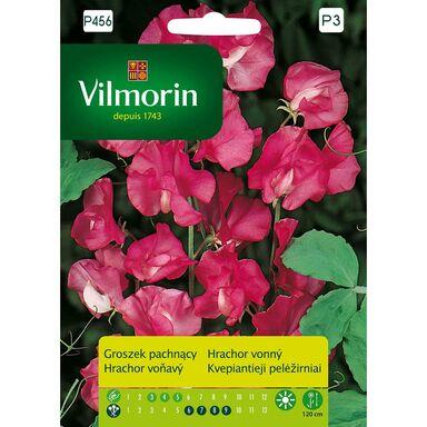Groszek pachnący RÓŻOWY nasiona tradycyjne 2 g VILMORIN
