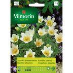 Sasanka dzwonkowata WHITE SWAN nasiona tradycyjne 0.1 g VILMORIN