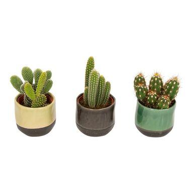 Kaktus w ceramice MIX 10 cm