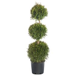 Rośliny, sadzonki