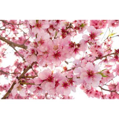 Fototapeta Kwiaty 375 x 250 cm