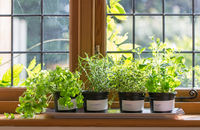 Kuchnia pełna ziół i kwiatów, czyli rośliny doniczkowe, które warto mieć w swojej kuchni