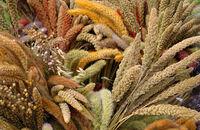 Rośliny na suche bukiety