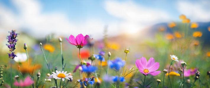 Liczne, wielobarwne kwiaty na łące, na tle nieba