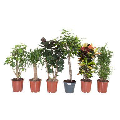 Rośliny Zielone Mix 80 110 Cm