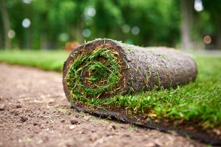 Układanie nowego trawnika przy pomocy gotowej rolki trawy