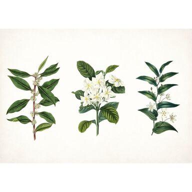 Kanwa Trzy Rośliny 100 x 70 cm
