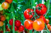 Przydomowa uprawa roślin