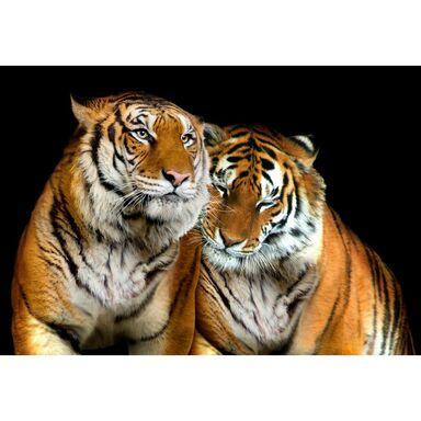 Fototapeta TIGERS 208 x 146 cm