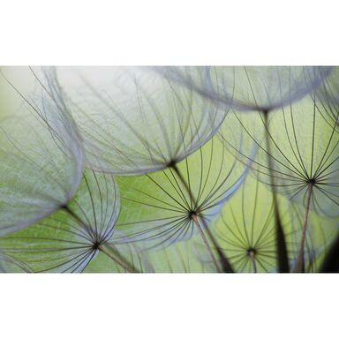 Fototapeta DMUCHAWIEC 70.5 x 104 cm