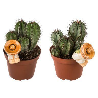 Kaktus z dekoracją MIX 15 cm