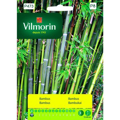 Nasiona kwiatów Bambus VILMORIN