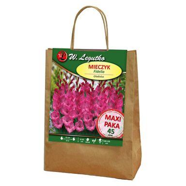 Cebulki kwiatów FIDELIO Mieczyk wielkokwiatowy 45szt. W. LEGUTKO