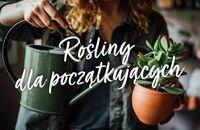 Rośliny doniczkowe dla początkujących