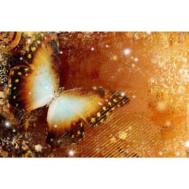 Fototapeta BUTTERFLY 219 x 312 cm