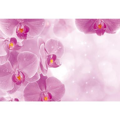 Fototapeta ORCHIDS 104 x 152 cm