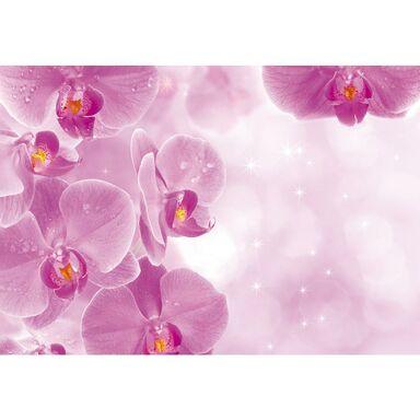 Fototapeta ORCHIDS 208 x 146 cm