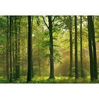 Fototapeta AUTUMN FOREST 254 x 366 cm
