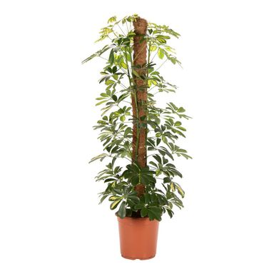 Rośliny zielone MIX 120 cm
