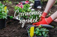 Czerwcowy ogródek domowy – co można jeszcze zasiać?