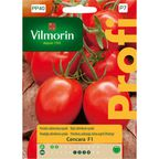 Pomidor szklarniowy CENCARA VILMORIN
