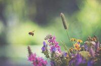 Ogród ekologiczny. Żyj w zgodzie z naturą