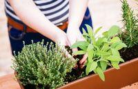Uprawa warzyw na balkonie