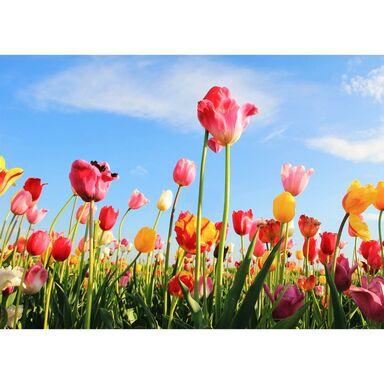 Kanwa Artcanvas Tulipany 70 x 50 cm