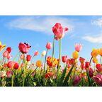 Kanwa Artcanvas Tulipany 100 x 70 cm