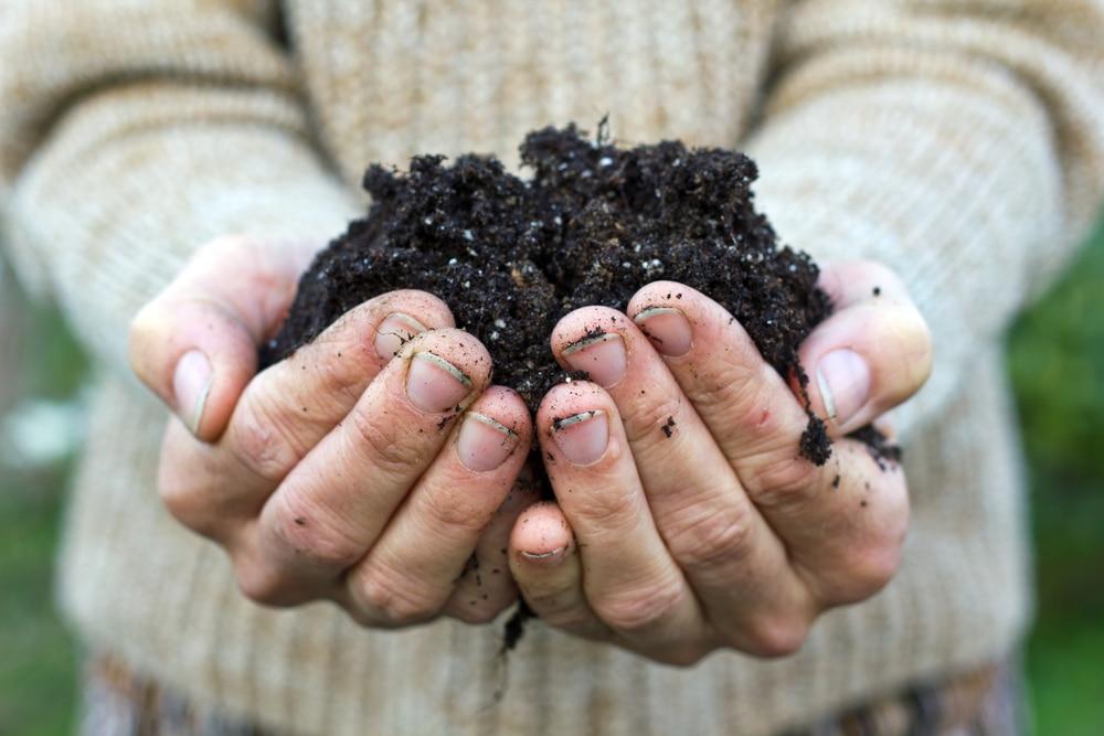 Gleba w ogrodzi... Gleba