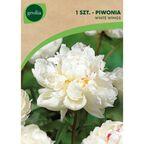 Cebulki kwiatów WHITE WINGS Piwonia 1szt. GEOLIA