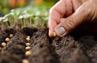 Co można siać w lipcu – letni ogródek