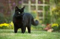 Co odstrasza koty? Poznaj kilka skutecznych środków