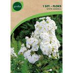 Floks wiechowaty WHITE ADMIRAL 1 szt. cebulki kwiatów GEOLIA
