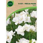 Frezja pełna WHITE 10 szt. cebulki kwiatów GEOLIA