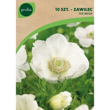 Cebulki kwiatów BRIDE Zawilec 10szt. GEOLIA