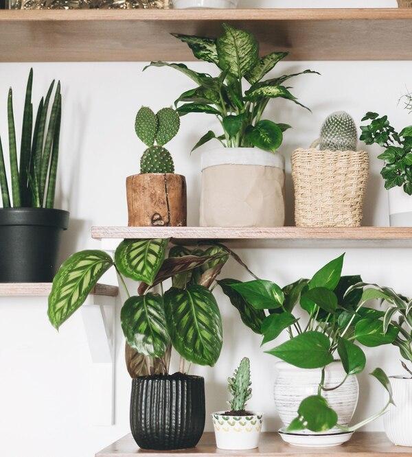 Rośliny dla początkujących