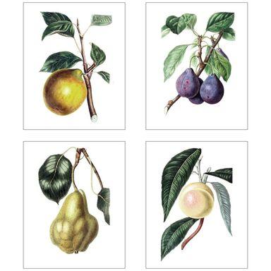 Zestaw 4 plakatów Owoce 28 x 35 cm