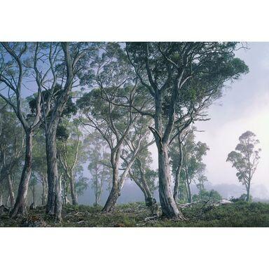 Fototapeta FANTASY FOREST 254 x 368 cm